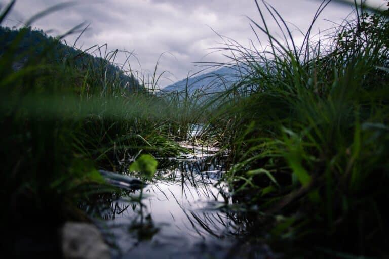 rens vand i å